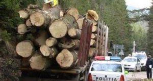 hotii de lemne